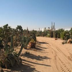 חוות הקקטוסים