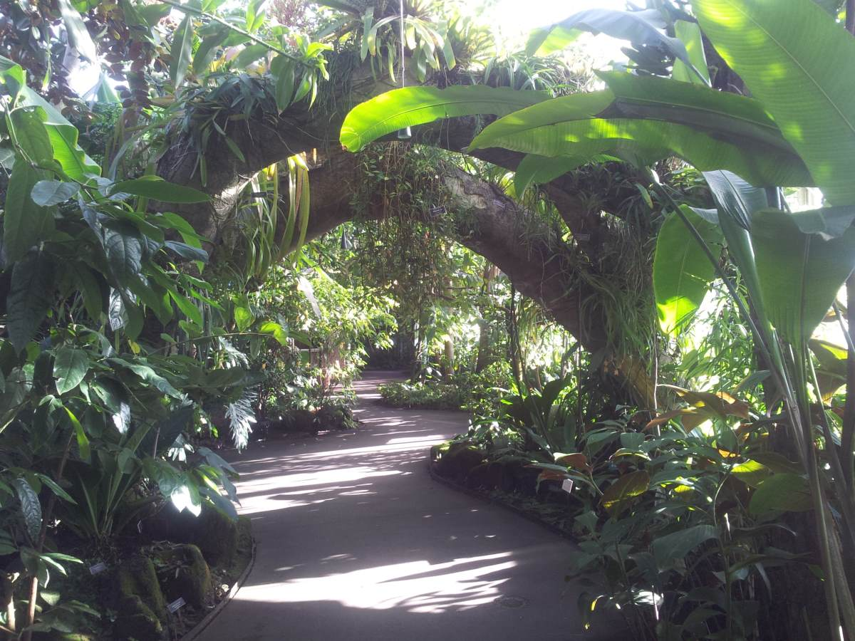 new-york-botanical-garden-greenhouse-3