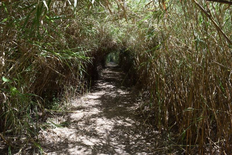 מסלולי הליכה פארק הירדן
