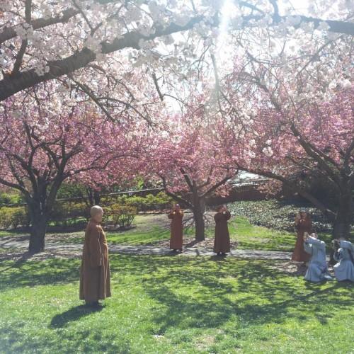 נזירים בגן הבוטאני של ברוקלין ניו יורק