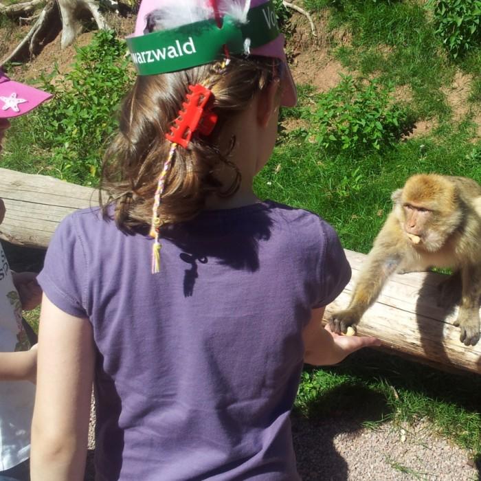 פארק הציפורים והקופים - Vogelpark Steinen