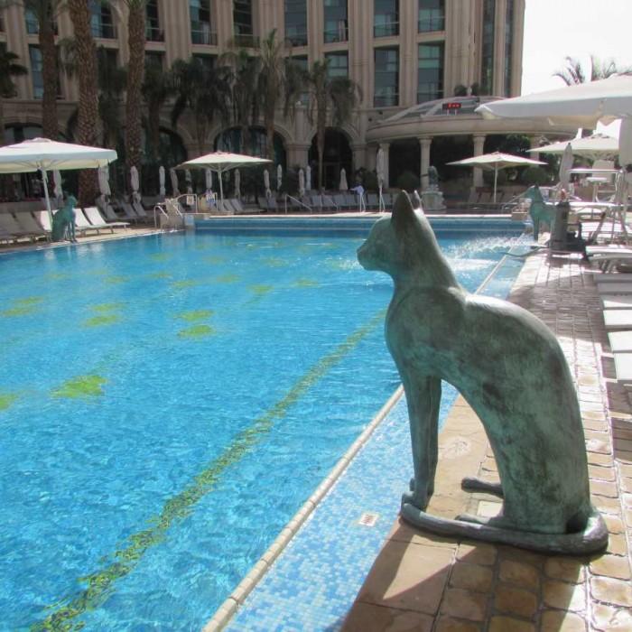 הבריכה מלון הילטון אילת