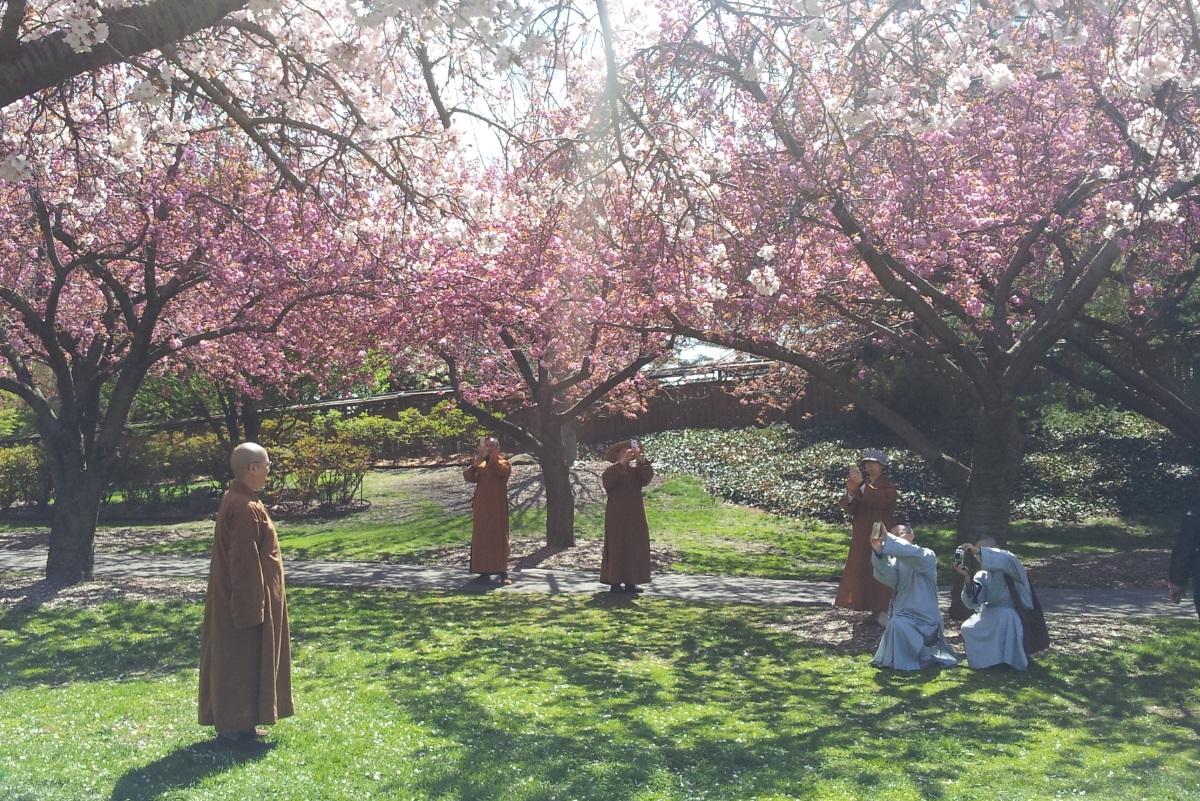 נזירים מתלהבים מפריחת הדובדבן בגן הבוטני של ברוקלין