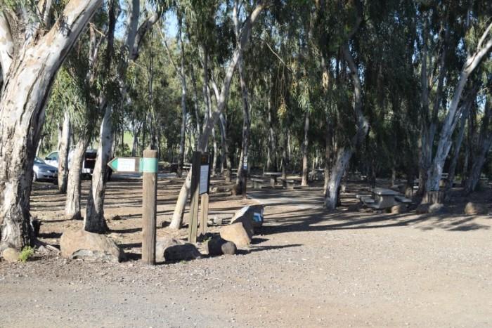 חניון דליות - הרבה שולחנות פיקניק מוקפים בעצי אקליפטוס