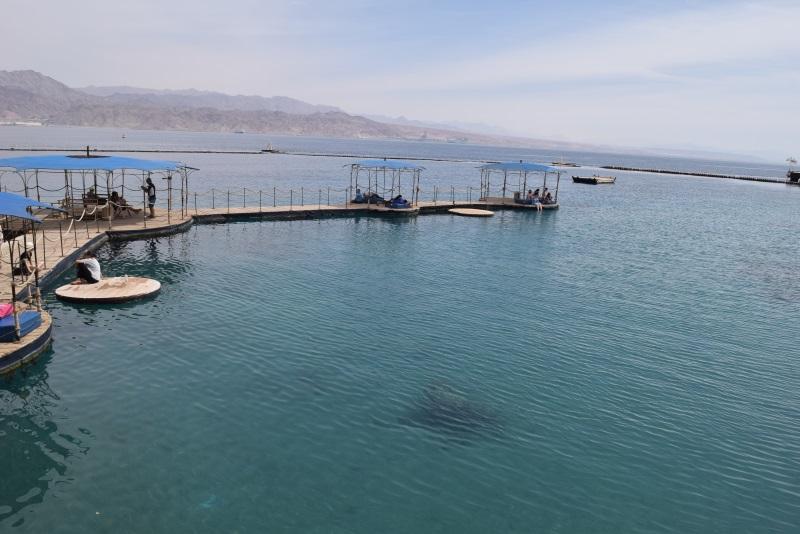 המזח שעליו ניתן לשבת ולראות את הדולפינים מקרוב