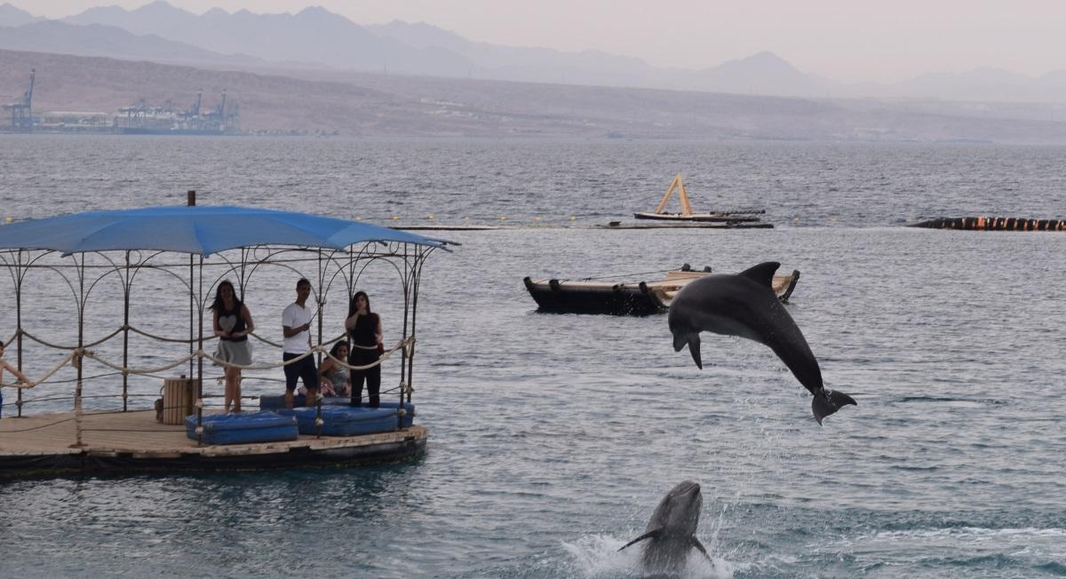 dolphin-reef-eilat-13