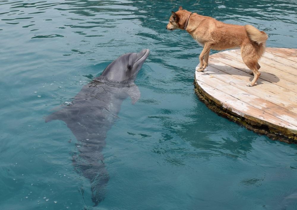 dolphin-reef-eilat-3