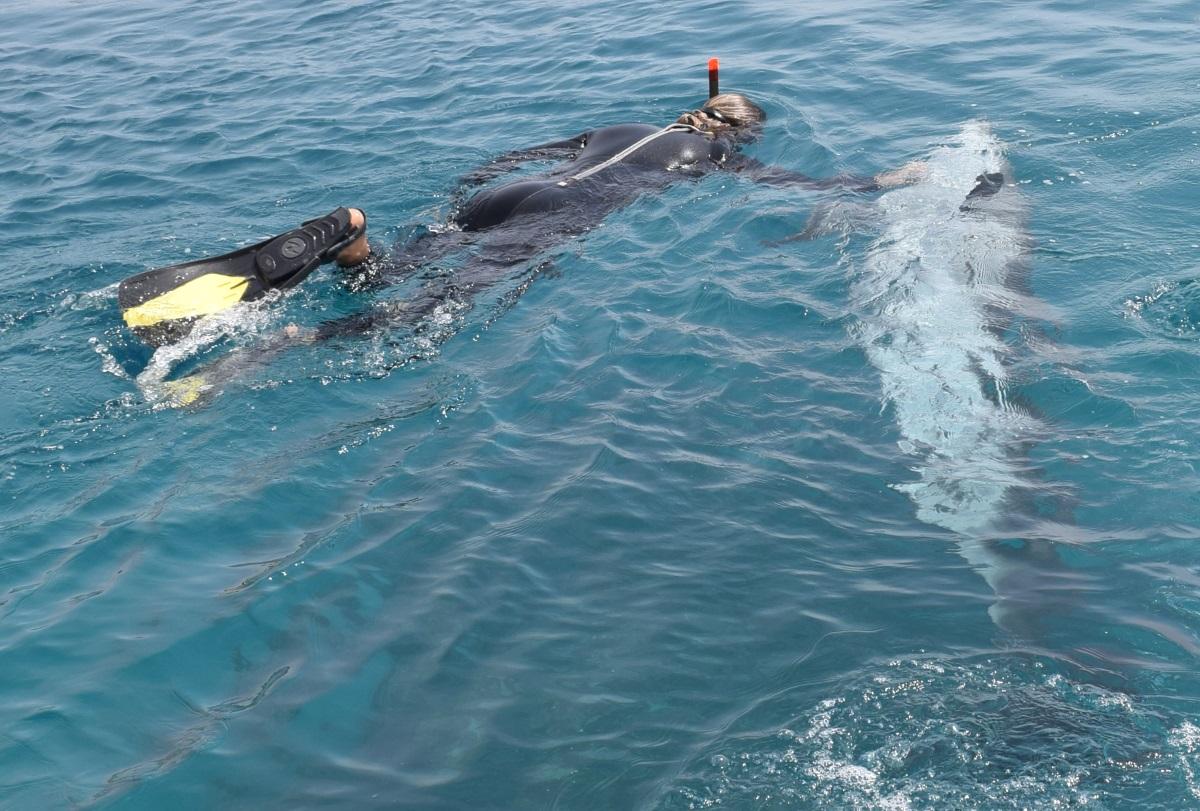 לשחות עם דולפינים ריף הדולפינים
