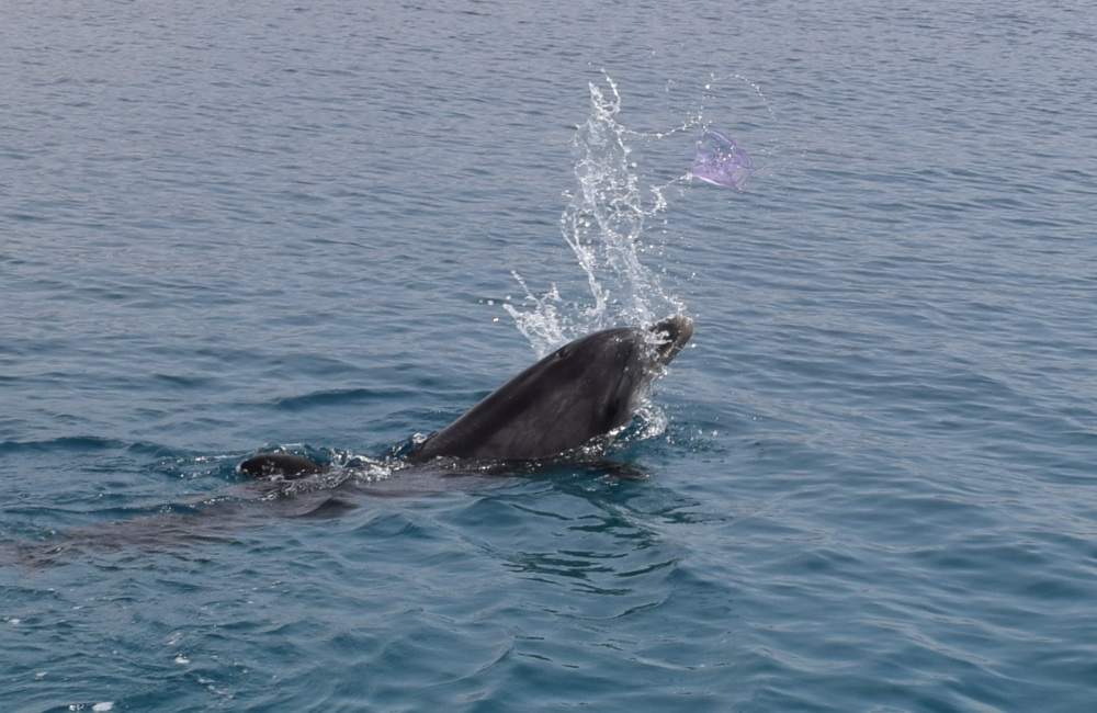 משחקים עם מדוזה ריף הדולפינים אילת