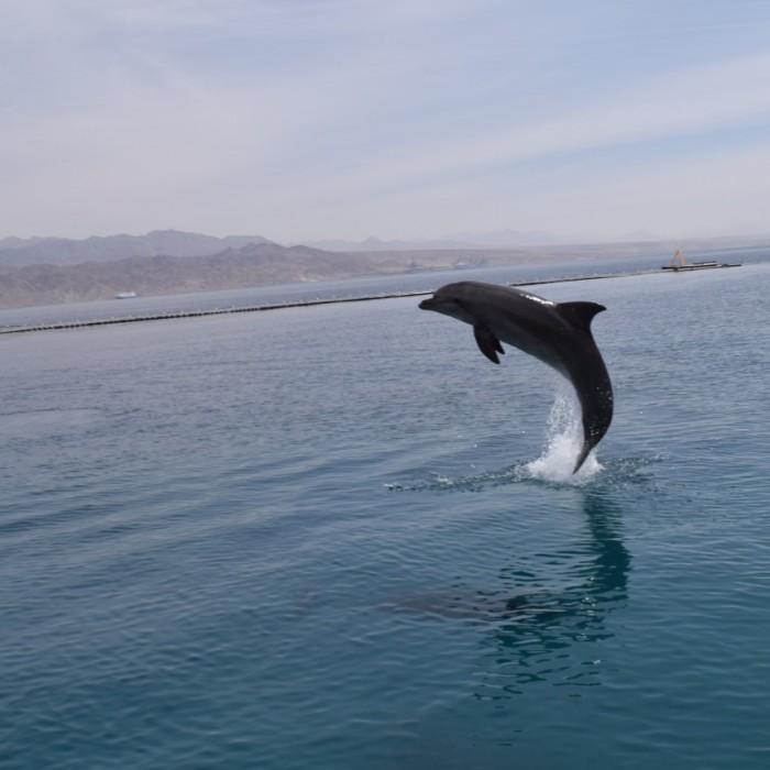 ריף הדולפינים
