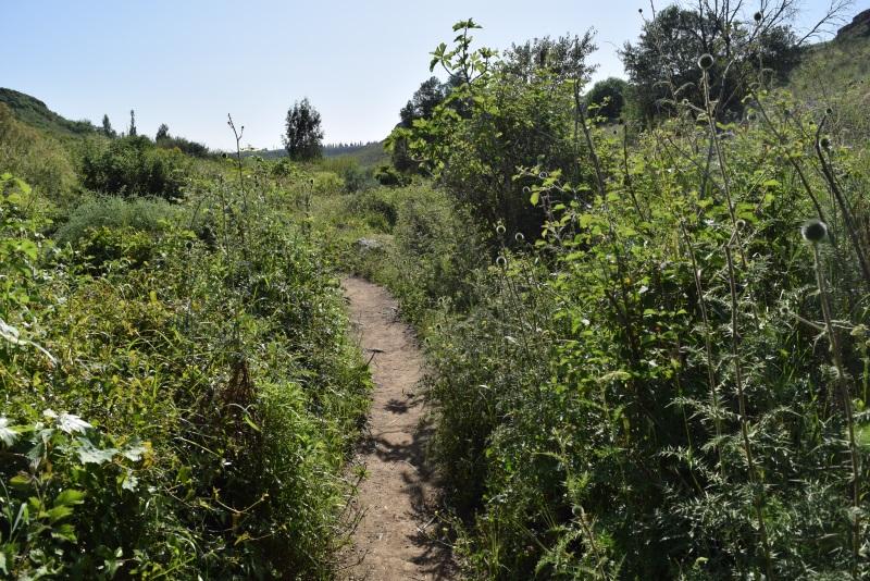 המסלול יחסית מישורי ומוקף בצמחים המפל השחור נחל אל אל