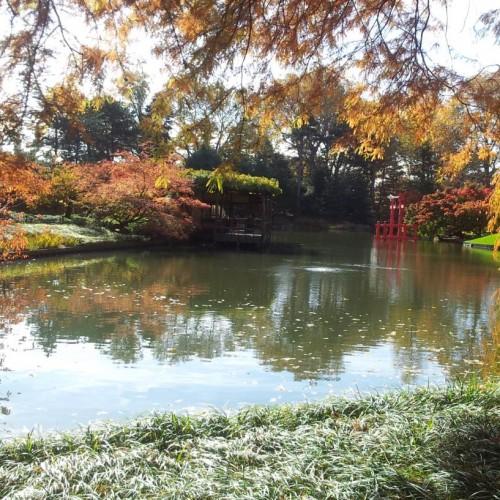 הגן היפני בגנים הבוטניים ברוקלין