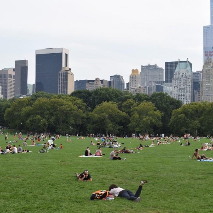 אנשים נופשים בסנטרל פארק בקייץ